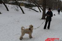 Пропавших людей ищут с помощью собак