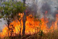Первый в этом году в Омской области лесной пожар загорелся в Москаленском районе.