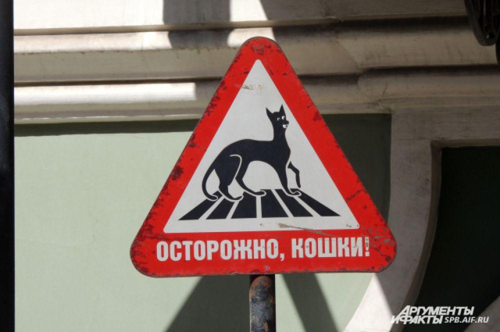 Сотрудники музея предупреждают: в Эрмитаже живут коты.