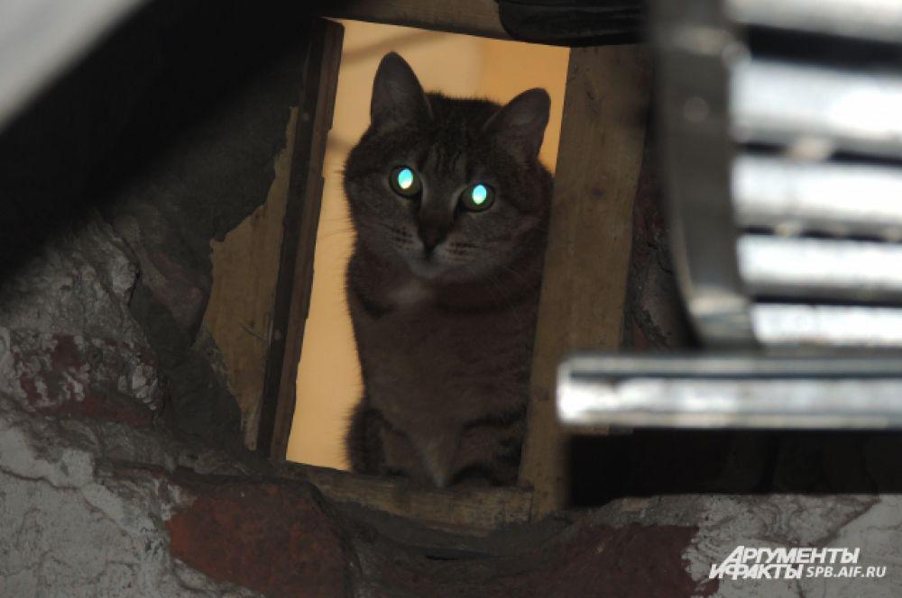 Коты умеют искусно прятаться от посторонних глаз.