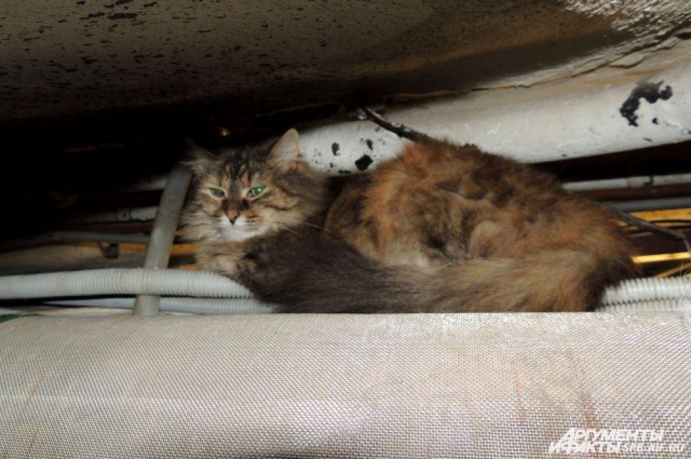 Впервые праздник - День эрмитажного кота - был устроен в 1998 году, с 2005-го он проводится регулярно.
