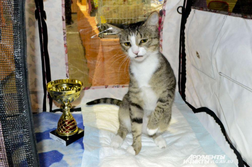 Беспородная домашняя кошка