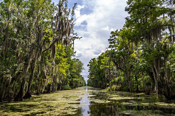В американском штате Луизиана, рядом с городом Новый Орлеан, находятся непроходимые болота Манчак, известные так же как «Болота призраков». Согласно легендам, это место было проклято черной ведьмой Вуду, когда XX веке ее взяли в плен в этих местах. Посреди болот стоят многовековые деревья с раскидистыми сучьями, порой спускающимися до самой воды, в то время как из воды торчат корни деревьев, выползающих словно змеи. В прошлом на болоте сгинула не одна сотня людей, но их трупы до сих продолжают всплывать, хотя прошло уже больше 100 лет.