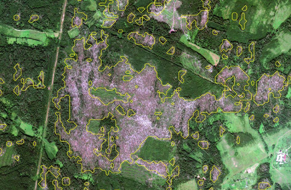 Снимок со спутника WorldView-2, дата 08.08.2012. Пространственное разрешение 0,5 м/пиксел, синтез в натуральных цветах. Кочевский муниципальный район, последствия ветровала 18.07.2012.