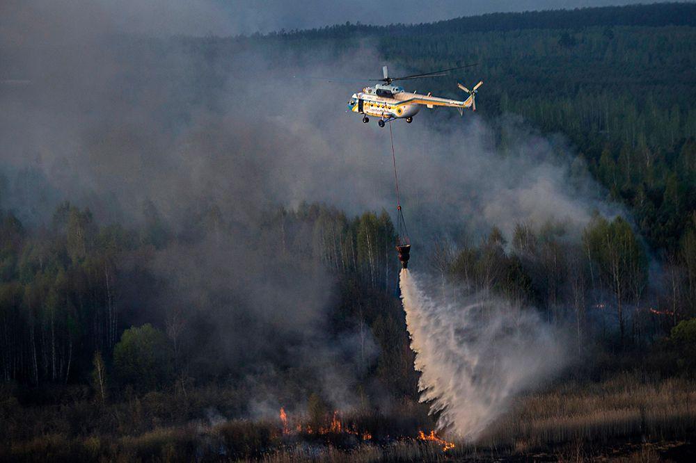 Местные власти не исключают, что лес пыл подожжен умышлено.