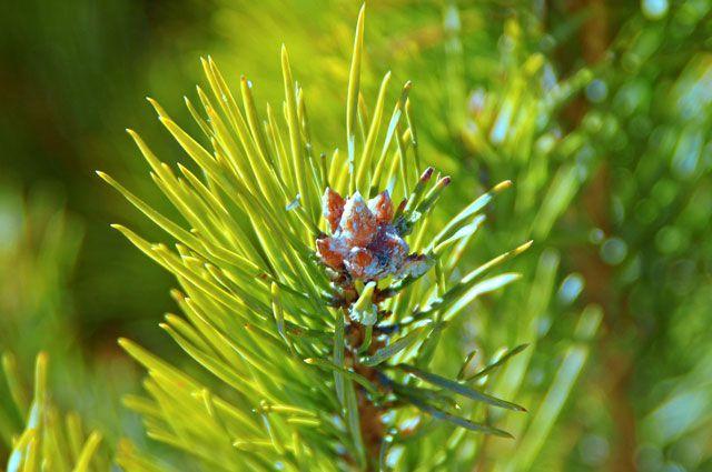 В Омской области займутся восстановлением лесов.