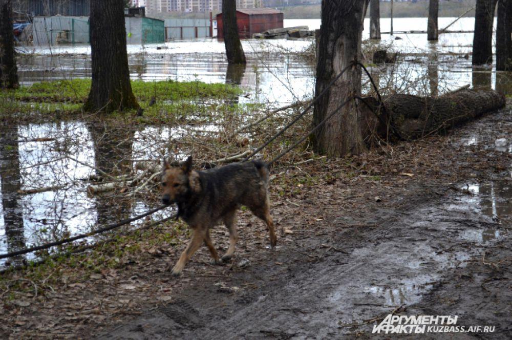 От паводка страдают также домашние животные.