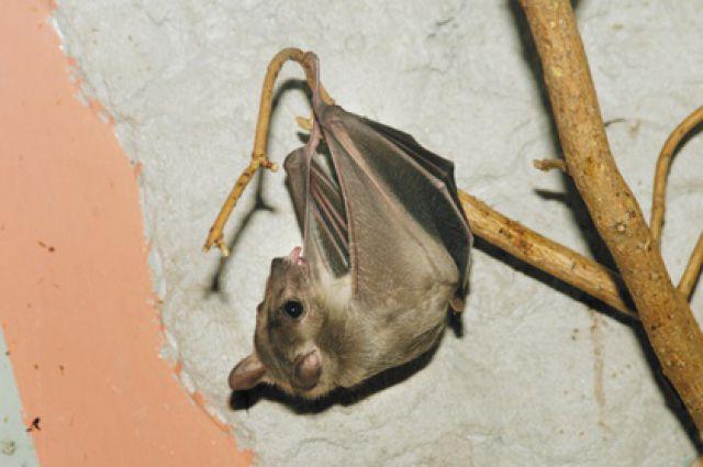 Полуночники Екатеринбурга смогут погладить летучих собак