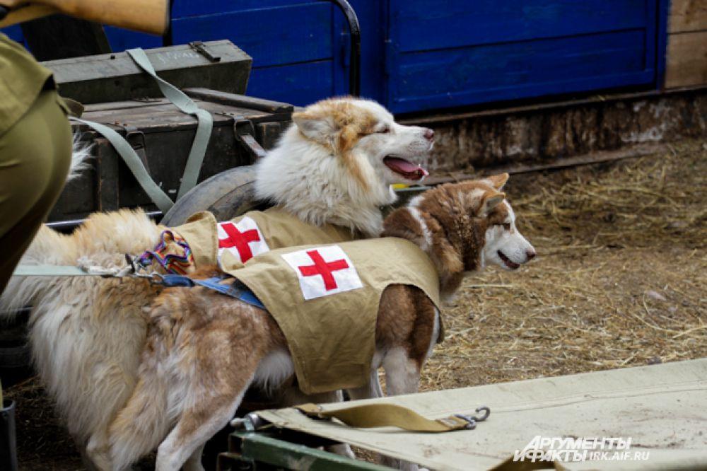 Без собак в Великой Отечественной войне обойтись было нельзя. Они искали фугасы, и неразорвавшиеся снаряды, взрывали вражеские танки и помогали вытаскивать с поля боя раненых солдат.