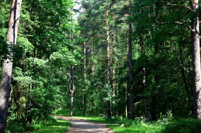 В Смоленской области ищут пропавшего в лесу 91-летнего ветерана ВОВ