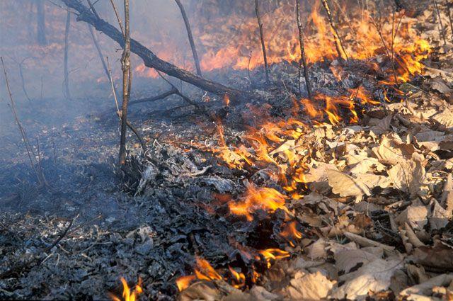 Лесные пожары в основном происходят по неосторожности людей.