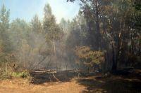 В июле прошлого года на Куршской косе выгорело 15 га леса.