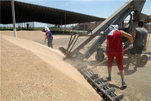 В ДНР надеются, что урожай зерна позволит обеспечить население хлебом