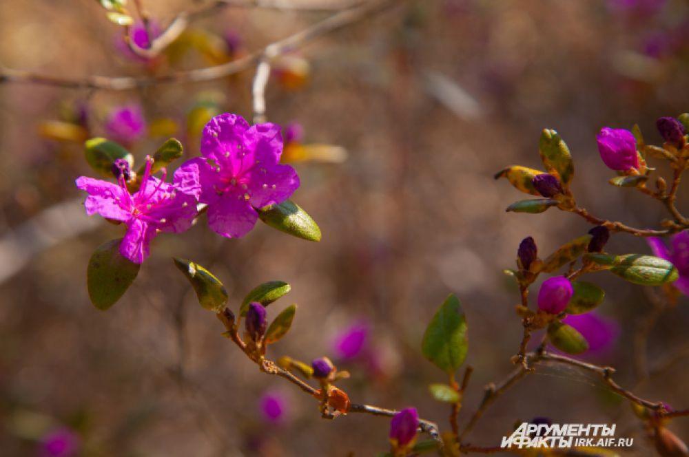Цветы конечно же являются источником первой пыльцы для насекомых.