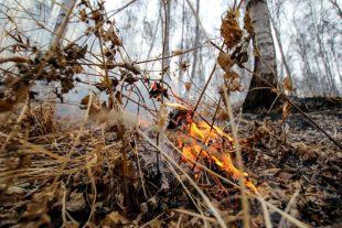 МЧС предлагает увольнять чиновников, допустивших природные пожары