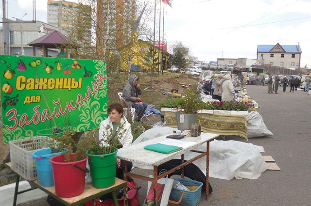Семена, саженцы, удобрения, садовый инвентарь - всё можно приобрести на выставке!