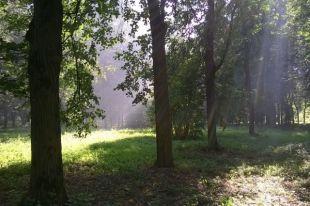Greenpeace: в Москве стало меньше деревьев