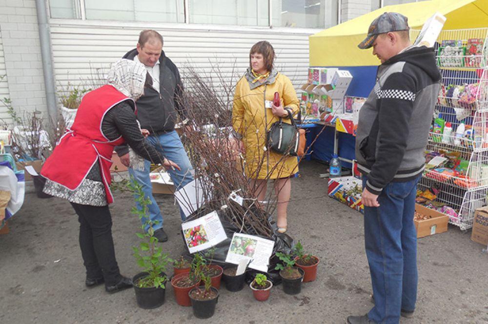 Во время выставки-ярмарки можно было получить консультацию по выращиванию культур.