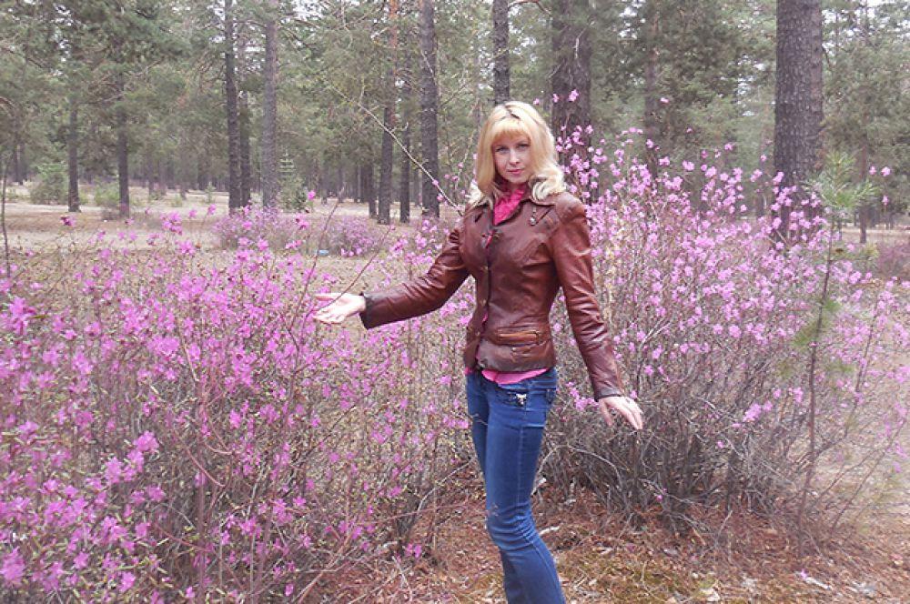 Сейчас в лесах Забайкалья много желающих посмотреть на цветущий багульник.