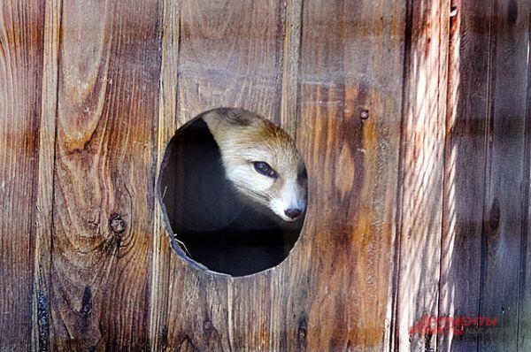 В конце марта в зоопарке родился ещё кое-кто...