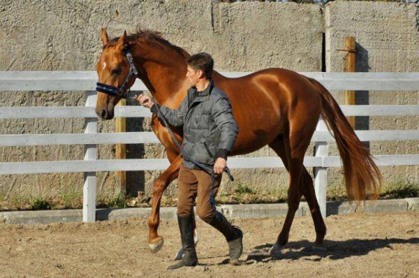 Такие красавцы есть в конно-спортивном клубе ДГТУ «Ход конём».
