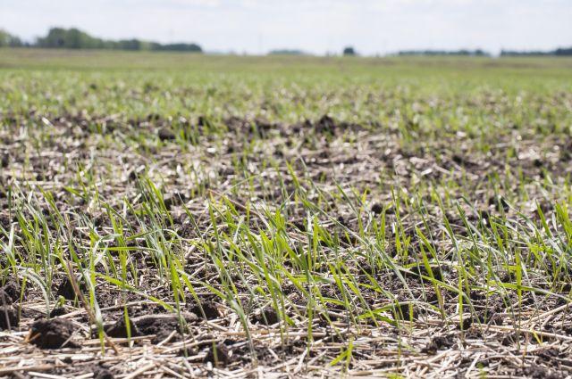 Омичи решат проблему засушливости земель.