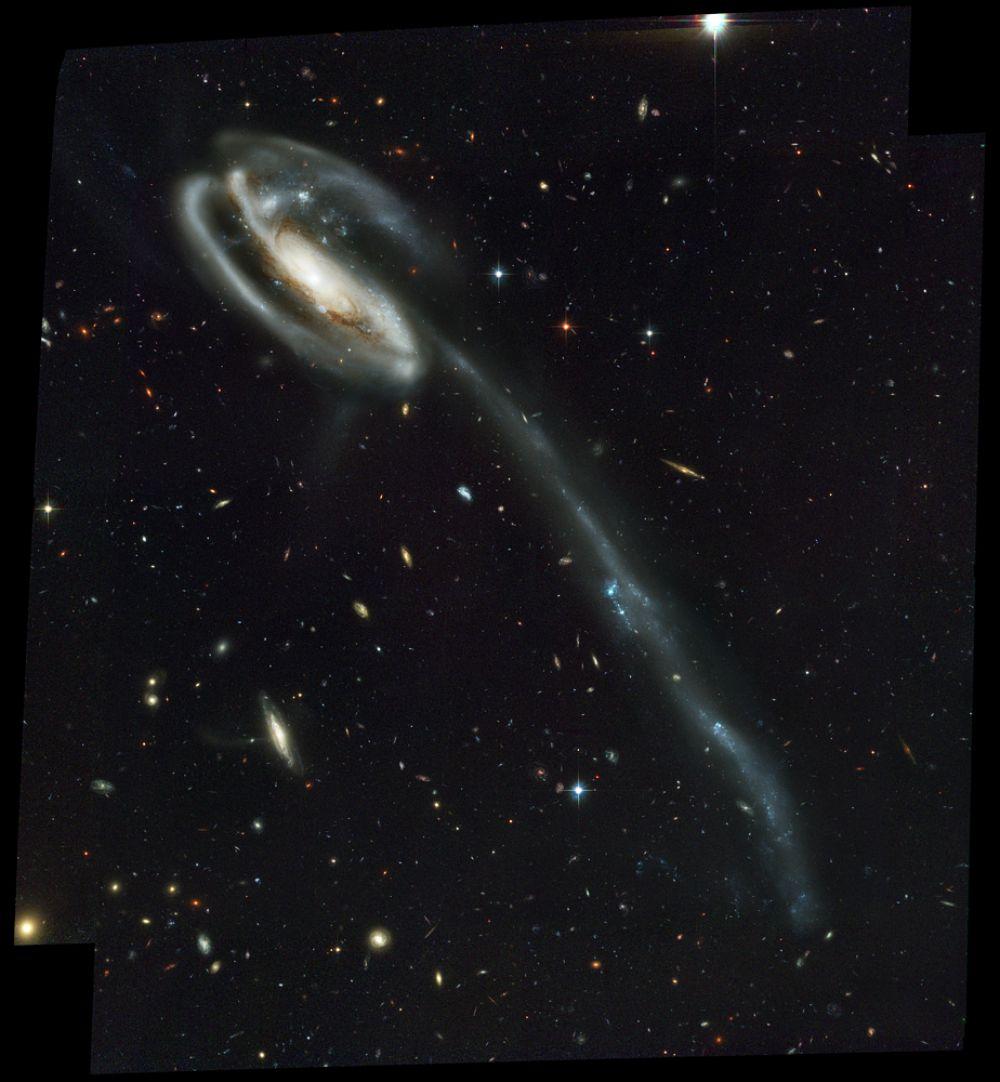 Галактика Головастик — пекулярная спиральная галактика с перемычкой, расположенная на расстоянии 400 миллионов св. лет от Земли в направлении на созвездие Дракона. В недалеком прошлом галактика испытала столкновение с другой галактикой, что привело к образованию длинного хвоста из звезд и газа. По мере вырастания головастика его хвост будет отмирать — звёзды и газ сформируются в карликовые галактики, которые станут спутниками большой спиральной.