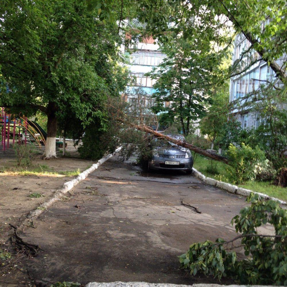 Дерево упало на машину на улице Камозина в Бежице.