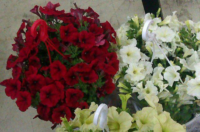 Саженцы и цветы пришлось вернуть в Польшу.