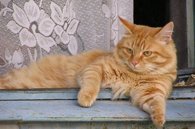 Бешенством в Омской области заболел один кот.