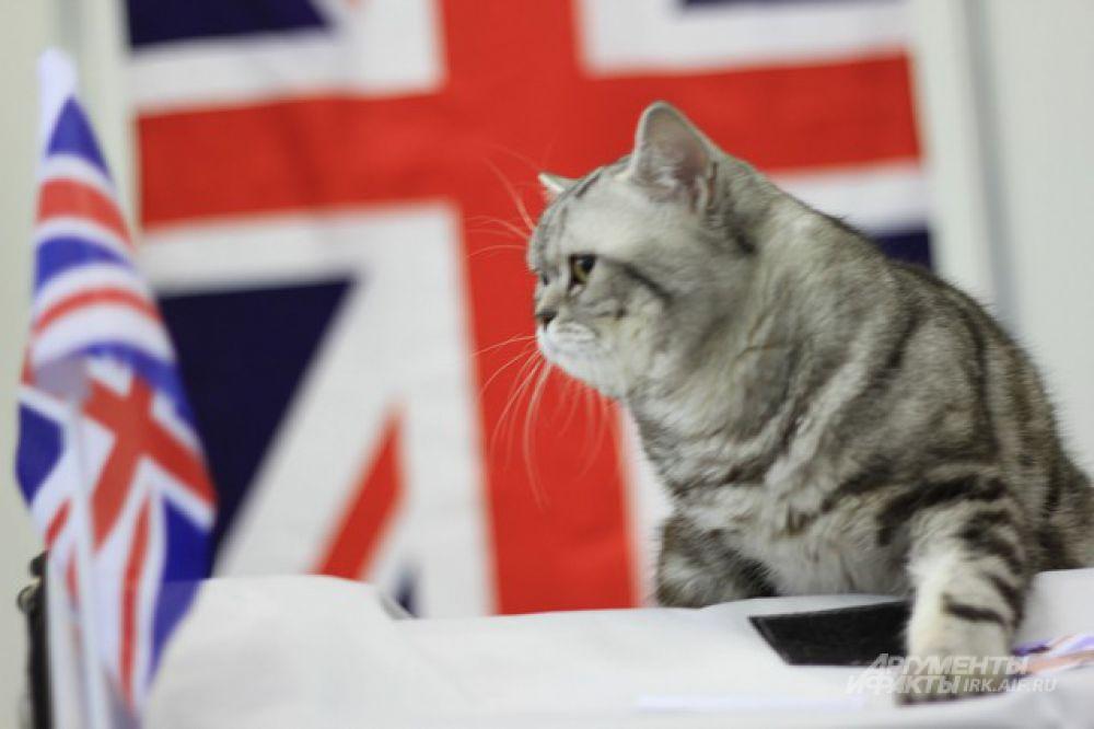 Британец во всем.