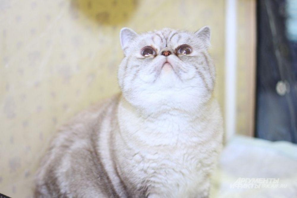 А вот и она - кошачья улыбка.