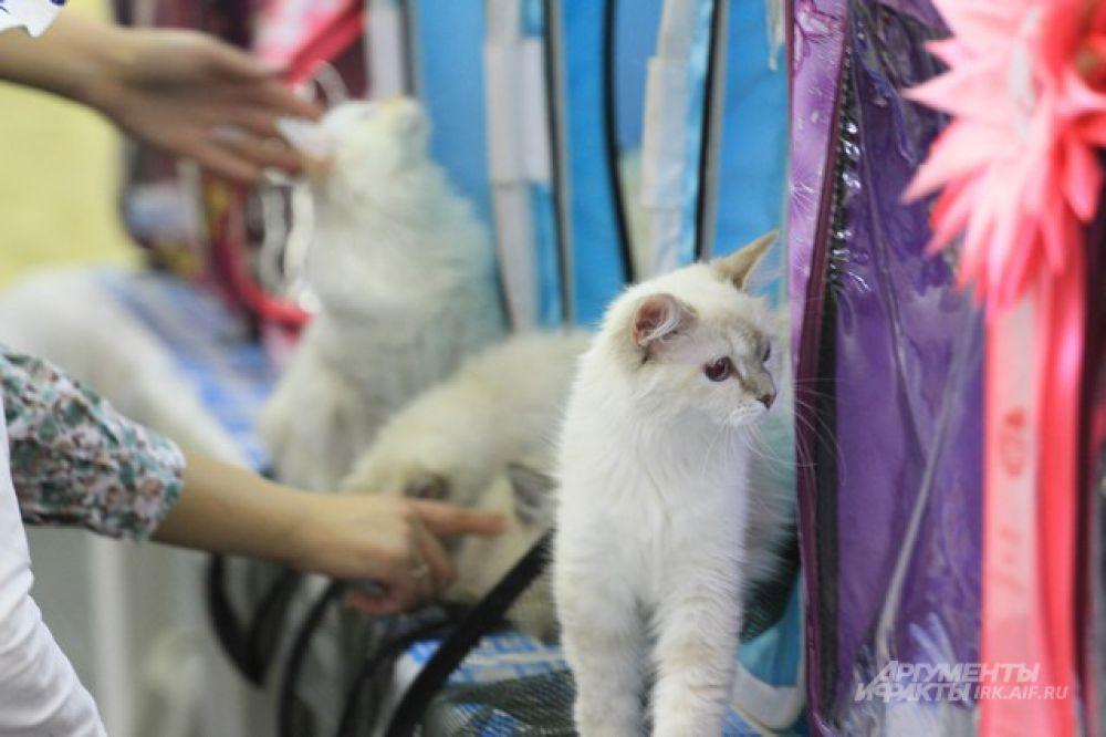 Котятам пока смысл суеты непонятен. Они с любопытством разглядывют все вокруг.