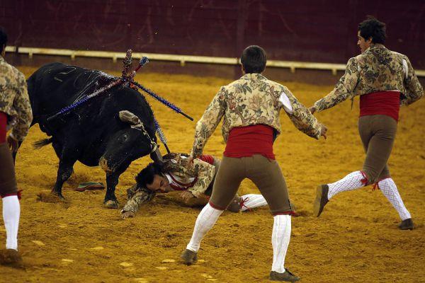 В корриде участвуют быки особой породы, по фенотипу близкие к туру. Различается много характеристик боевых быков, особо ценится их соответствие одному из 7 идеальных образцов («каст»).