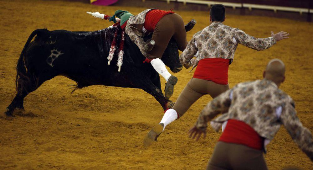 4 июля в Лиссабоне состоялась очередная коррида, в которой на арену вышли тореро из групп Forcados Portalegre и Aposento da Moita.