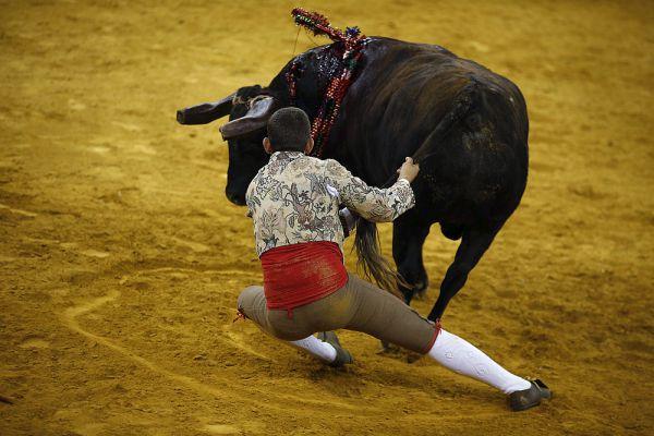 Особенность боев, которые устраивает эта команда в том, что тореадоры вступают в схватку с быками буквально голыми руками. Разумеется, прежде чем бросится на разъяренное животное, тореро изматывают его.
