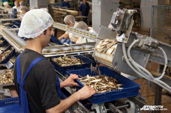 Процесс отсечения голов у кильки рыбаки называют «стрижкой».