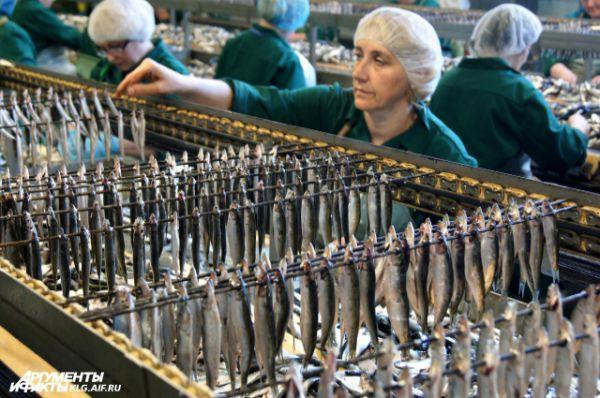 За 8 часов смены каждая рыбообработчица накалывает по 350 кг кильки.