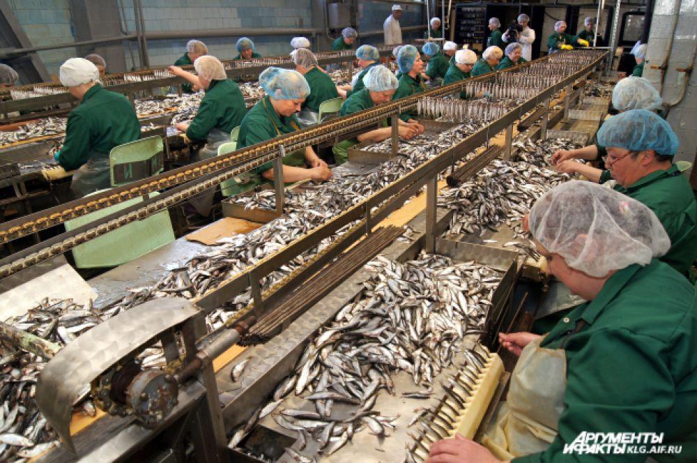 Сотрудницы рыбоконсервного комплекса подготавливают рыбу для дальнейшего консервирования. Сначала рыбку тщательно моют, погружают ненадолго в слабый раствор соли (тузлук), после чего ополаскивают пресной водой, затем нанизывают (через рот и жаберное отверстие) на металлический прутик.