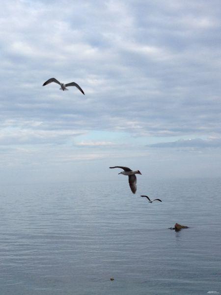 Чайки над морем.