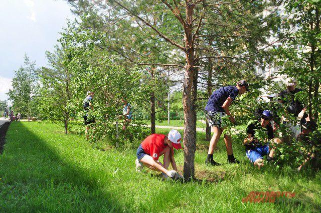 Озеленять город помогают омские школьники.