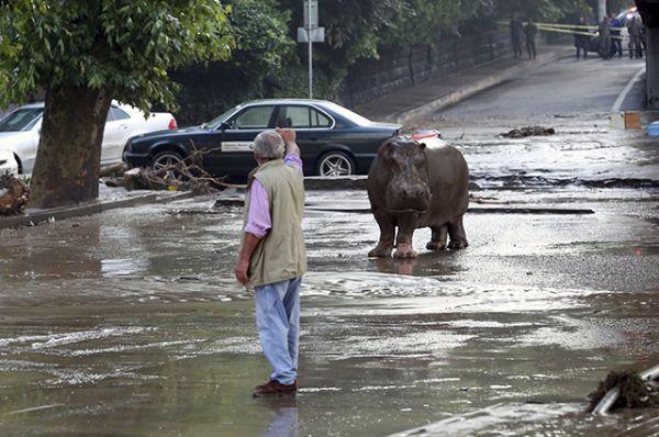 В результате разгула стихии был разрушен городской зоопарк. Десятки животных оказались на улице.