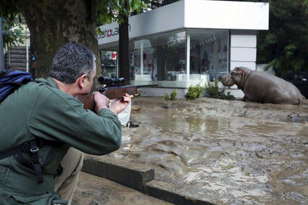 По последним данным, из зоопарка сбежали более 30 хищников: 6 тигров, 6 львов, 7 медведей, 13 волков, а также другие животные. Местные жители сообщают, что видели, как по городу разгуливают крокодил, бегемот и тигр.