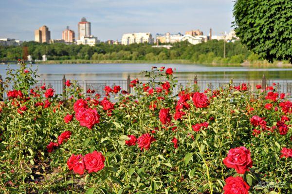 Донецк всегда называли городом миллиона роз.