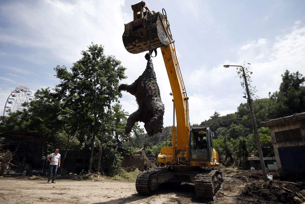 17 июня. Экскаватор увозит тушу медведя, погибшего в зоопарке Тбилиси во время наводнения.