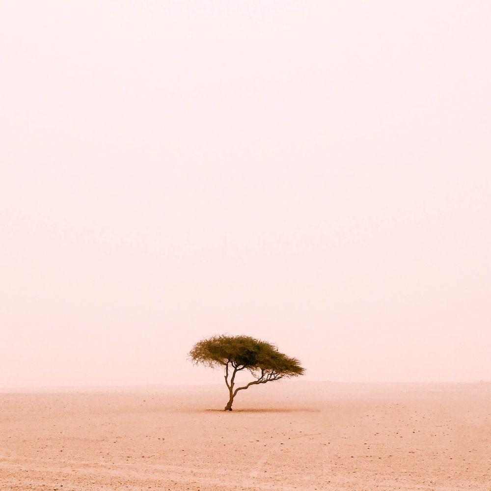 1-е место в номинации «Деревья» — Руайрид МакГлинн (Великобритания). Руайрид специализируется на пейзажах и любит путешествовать. Этот снимок сделан во время поездки в Катар. Одинокое дерево в пустыне на границе с Саудовской Аравией — из серии, посвященной уникальным деревьям. «Это один из тех моментов, которые я никогда не забуду», — поделился эмоциями фотограф.