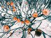 1-е место в номинации «Цветы» досталось Эми Пэтерсон из ЮАР. Снимок был сделан в природном заповеднике Сильвермин в Кейптауне. Это цветы растения протея — национальный символ ЮАР. Этот вид интересен своей огнестойкостью: растение полностью приспособилось к пожарам, более того — многие его разновидности нуждаются в стимуляции огнем.
