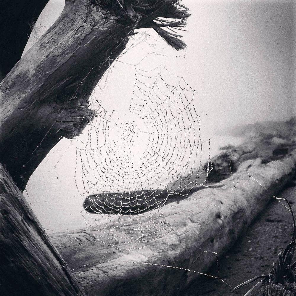 1-е место в номинации «Природа» у Ивонны Нотон из США. Ивонна называет себя «случайным фотографом». Во время утренних прогулок с собакой по пляжу ей удалось сделать несколько удачных кадров с паутиной. После обработки капли росы на паутине засверкала как алмазы, на чем автор и хотела акцентировать внимание.