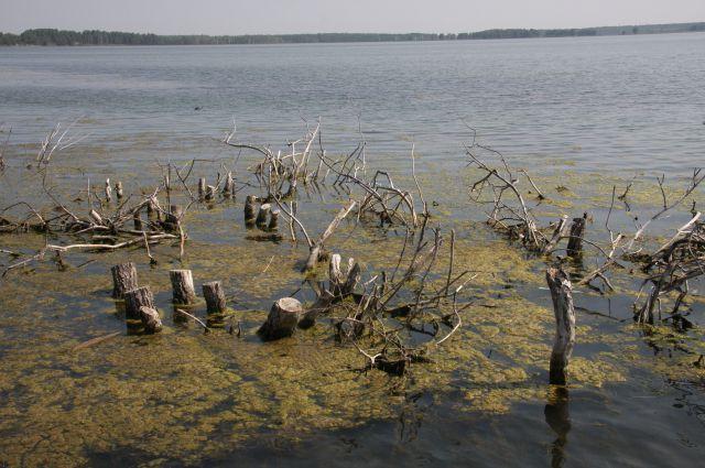 Свердловский Роспотребнадзор: в водоемах региона лучше не купаться