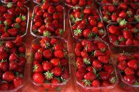Дороги возле польско-российской границы вот уже нескольких дней заставлены лотками со свежими фруктами с табличками на кириллице «клубника».